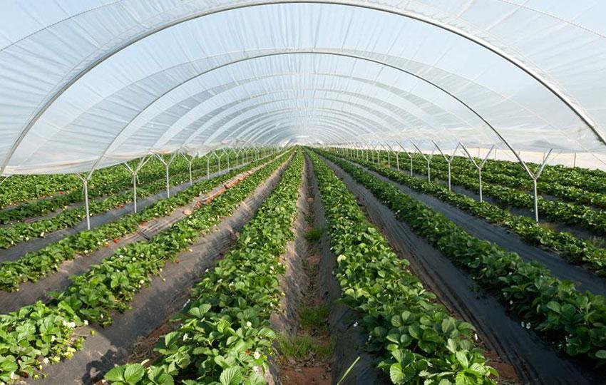 Πώς να Δημιουργήσω την Πρόταση Αξίας μιας Μικρής Αγροδιατροφικής Επιχείρησης;