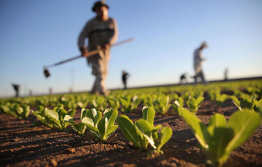 Η συνέργεια ως στρατηγική ανάπτυξης αγροδιατροφικών επιχειρήσεων