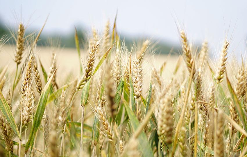 Σεμινάριο (Μ42): Αγροτική Επιχειρηματικότητα